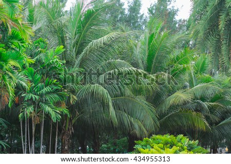 Selective focus coconut tree jungle - stock photo