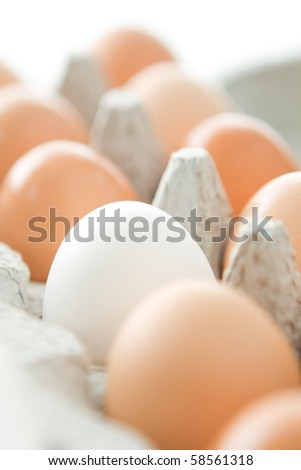 Selective focus of a carton of brown eggs with one white egg - stock photo