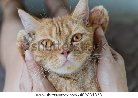 Selective focus of cute cat being hold by woman hands and lying on her knees. - stock photo