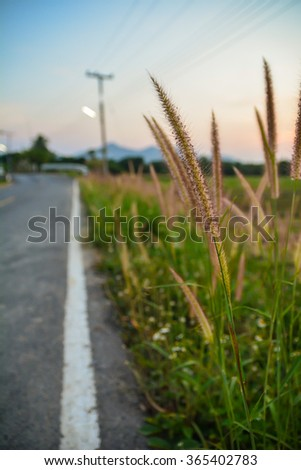selective focus of grassland on roadside - stock photo