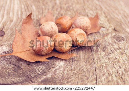 Selective focus on acorns without the caps on an oak leaf. - stock photo