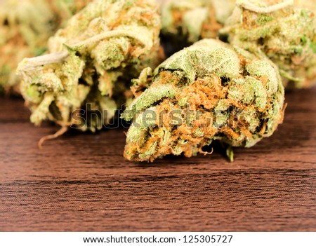 Selective focus on the front bud of skunk - stock photo