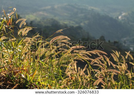 Selecttive focus the grassland on mountains in autumn - stock photo