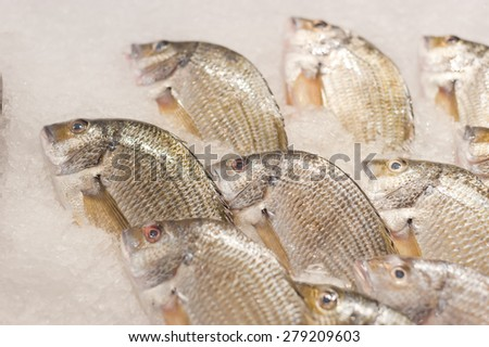 Selling fresh fish at a fishmarket - stock photo