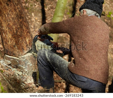 Senior caucasian man woodcutter cutting down trees with chainsaw - stock photo