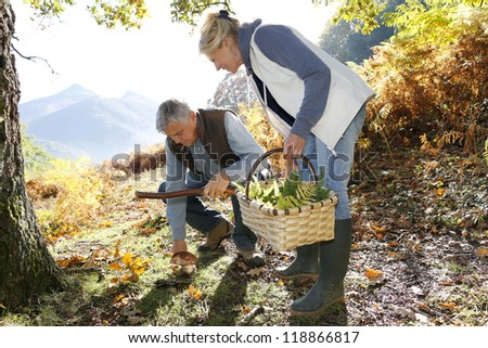 Senior couple in forest picking mushrooms - stock photo