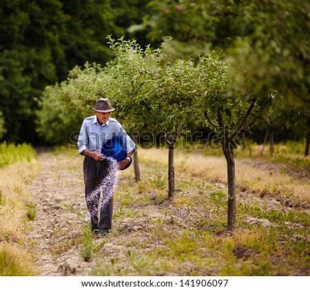 Senior farmer doing seasonal work, spreading fertilizer in a plum trees orchard - stock photo