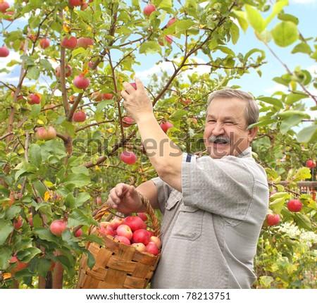 Senior farmer, harvesting a apple - stock photo