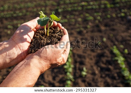 Senior farmer holding a green young plant on field. - stock photo