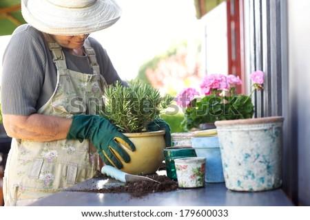 Senior female gardener planting new plant in terracotta pots on a counter in backyard - stock photo