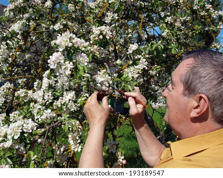 Senior gardener making artificial pollination by soft brush - stock photo