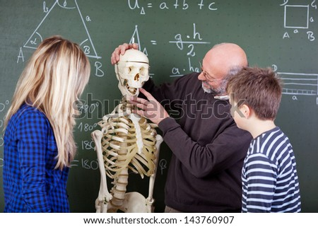 Senior male teacher explaining skeleton parts to students in biology class - stock photo