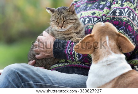 Senior man holding a cat in his arms and dog is watching at him - stock photo