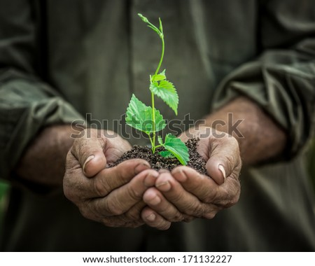 Senior man holding young spring plant in hands. Ecology concept - stock photo