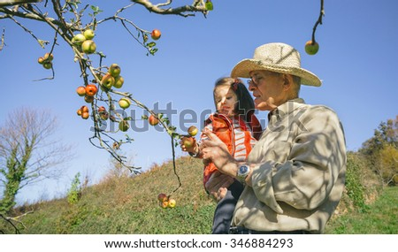 Senior man with hat and adorable little girl picking fresh organic apples from the tree in a sunny autumn day. Grandparents and grandchildren leisure time concept. - stock photo