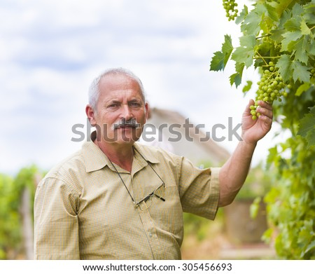 Senior winemaker and horticultural expert checking unseasoned grape. - stock photo
