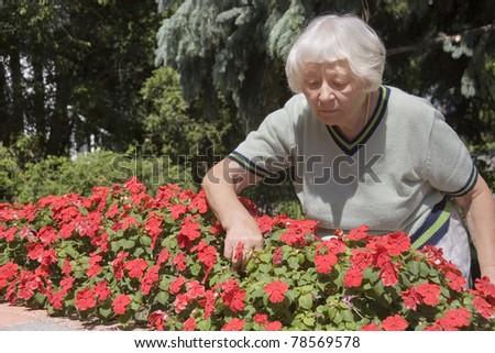 Senior woman flower garden - stock photo