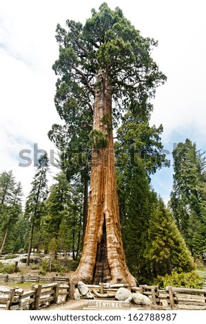 Sentinel, Sequoia National Park - stock photo