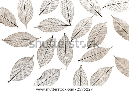 sepia colored skelton leaves - stock photo