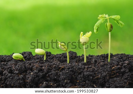 Sequence of seed germination on green background - stock photo
