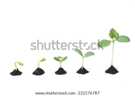 Sequence of seed germination on soil, evolution concept                         - stock photo