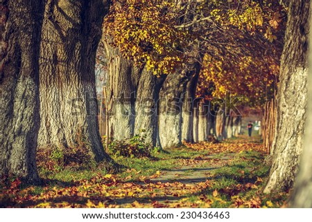 Serene autumn landscape with alley covered by fallen dry brown leaves in a sunny day. Shallow depth of field, selective focus. - stock photo