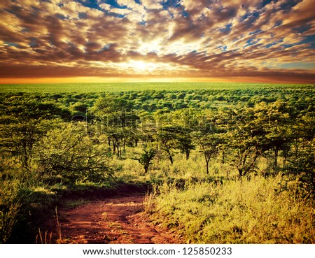 Serengeti savanna landscape with road at sunset in Tanzania, Africa. - stock photo