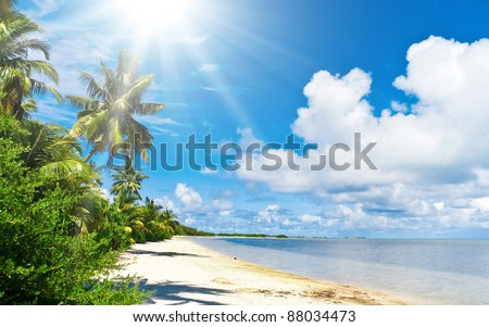 Serenity and Peace Ocean meets Jungle - stock photo