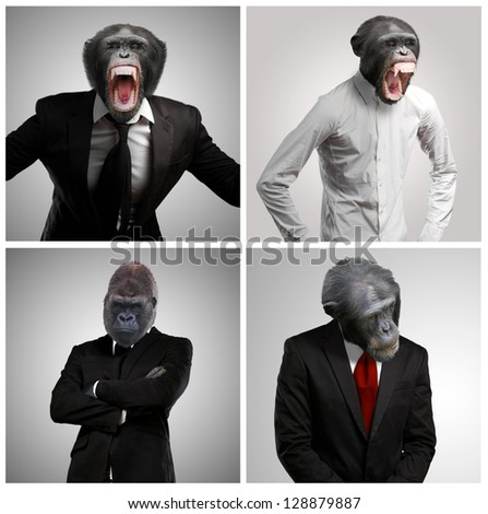 Series Of A Businessman With Monkey Head On Gray Background - stock photo