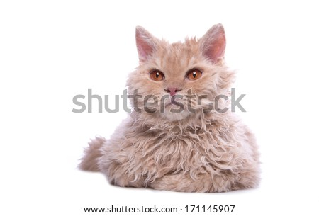 Serious cat is isolated on a white background. - stock photo
