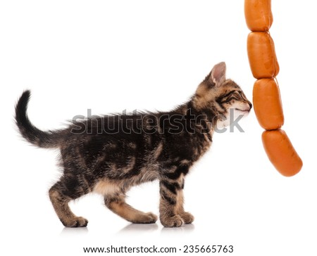 Serious cute siberian kitten with delicious sausages over white background - stock photo