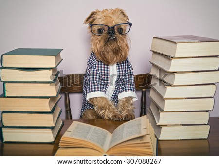 Serious dog in glasses and  shirt reads books - stock photo