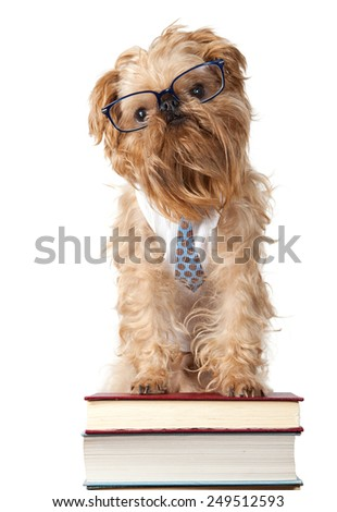 Serious dog in the glasses is on the books, isolated on white - stock photo