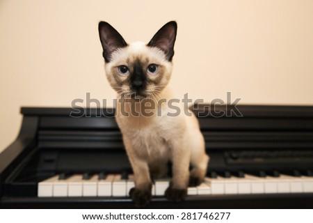 Serious kitty sitting on the black keyboard - stock photo
