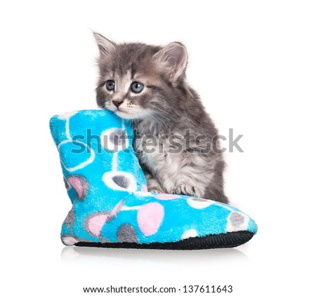 Serious little kitten with fleece bootee over white background cutout - stock photo