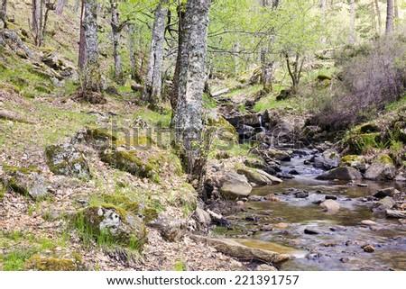Sestil de Maillo stream. Canencia. Sierra de la Morcuera. Madrid. Spain. Europe. - stock photo