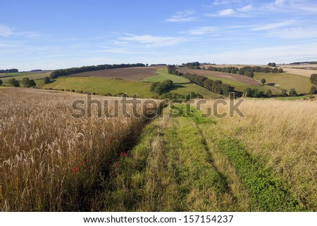 set aside dry grass field and farm track in scenic agricultural countryside with wildflowers hills and hedgerows under a blue sky in autumn - stock photo