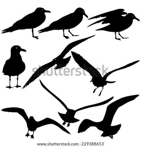 Set black silhouettes of seagulls on white background.  illustrations. - stock photo