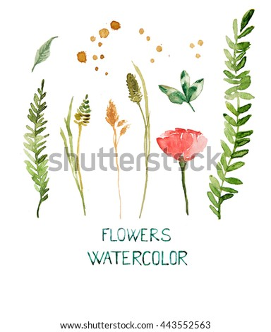 Set flowers. Summer grass. Natural world.Wild herbs for floral design.Floral design.Full-scale sketches.Watercolor plants. - stock photo