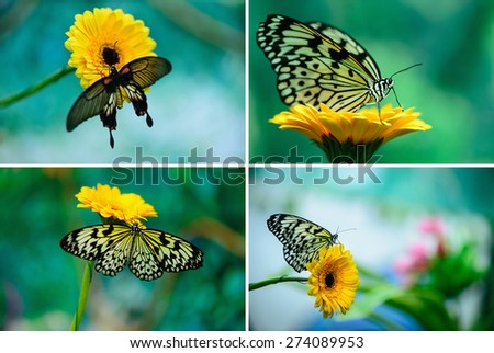 set insect butterfly on a flower on a colored background macro - stock photo