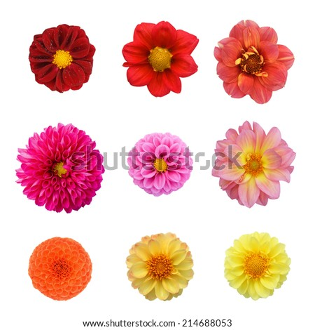 Set nine flowers isolated on white background - stock photo
