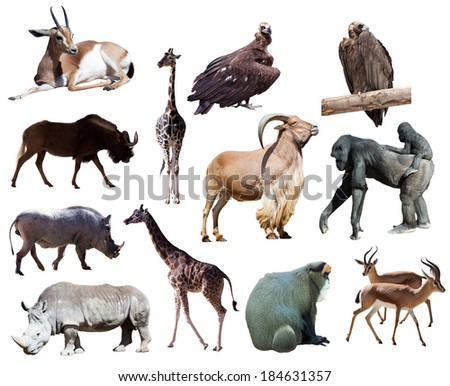 Set of african animals. Isolated on white  - stock photo