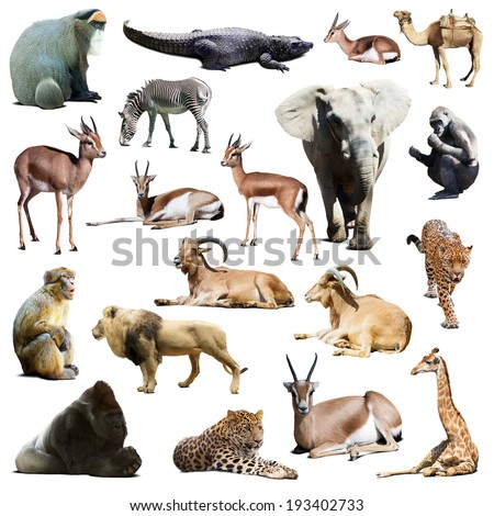 Set of african animals. Isolated on white  with shade - stock photo
