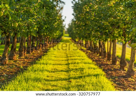 set of apples on Lake Constance Germany - stock photo