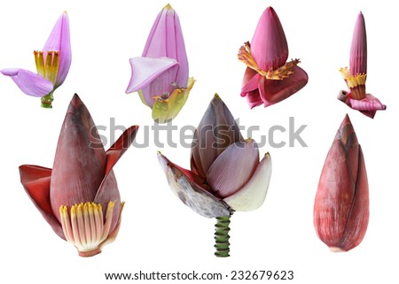 Set of banana flower isolated on white background - stock photo