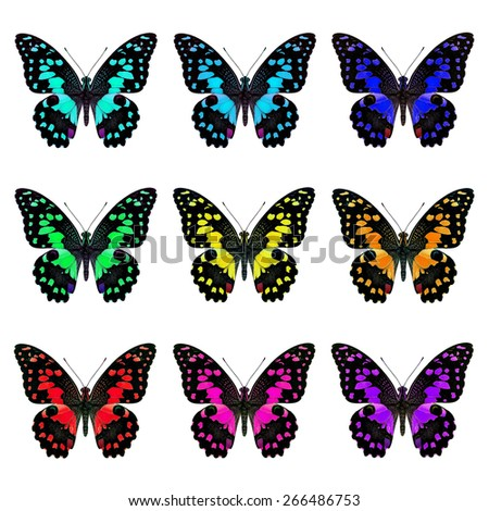 Set of beautiful butterfly, Lime Butterflies in fancy color isolated on white background - stock photo