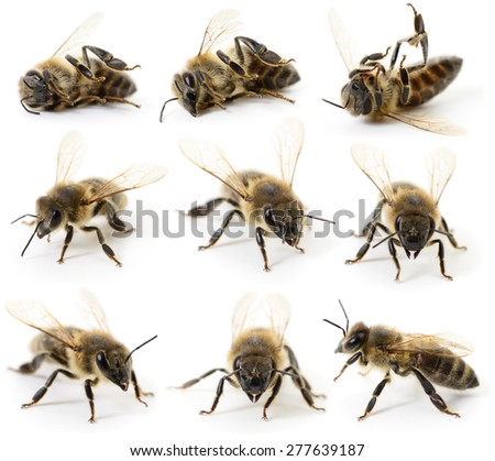 Set of bees on a white background - stock photo