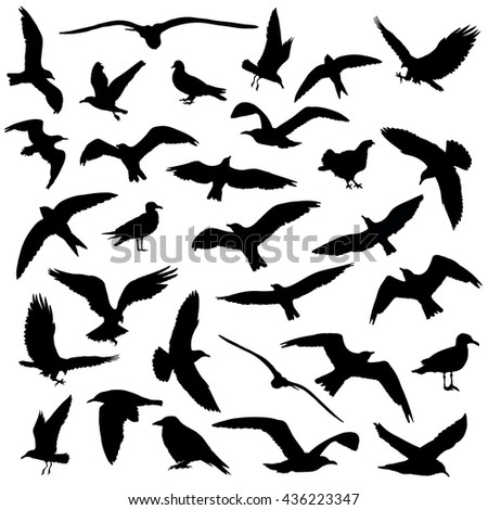Set of birds silhouettes 30 in 1 on white background - stock photo