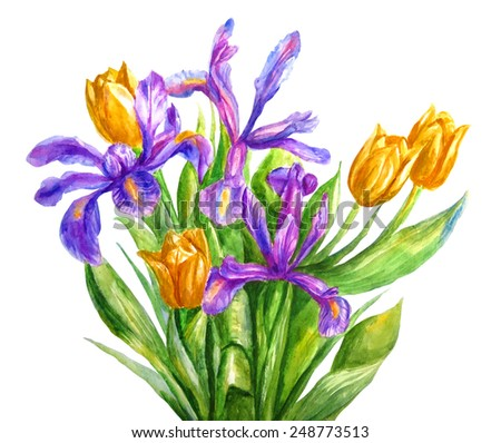 Set of bouquet of  tulips and irises. Spring flowers. Watercolor illustration. Card background isolated on white. - stock photo