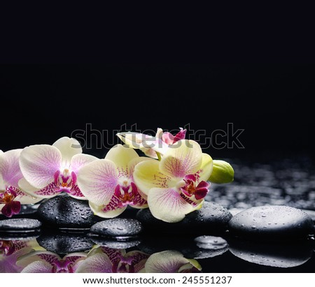 Set of branch orchid with therapy stones  - stock photo